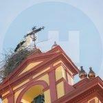 Cigüeñas en la Iglesia de San Sebastián
