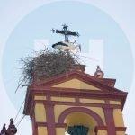Cigüeña en la Iglesia de San Sebastián