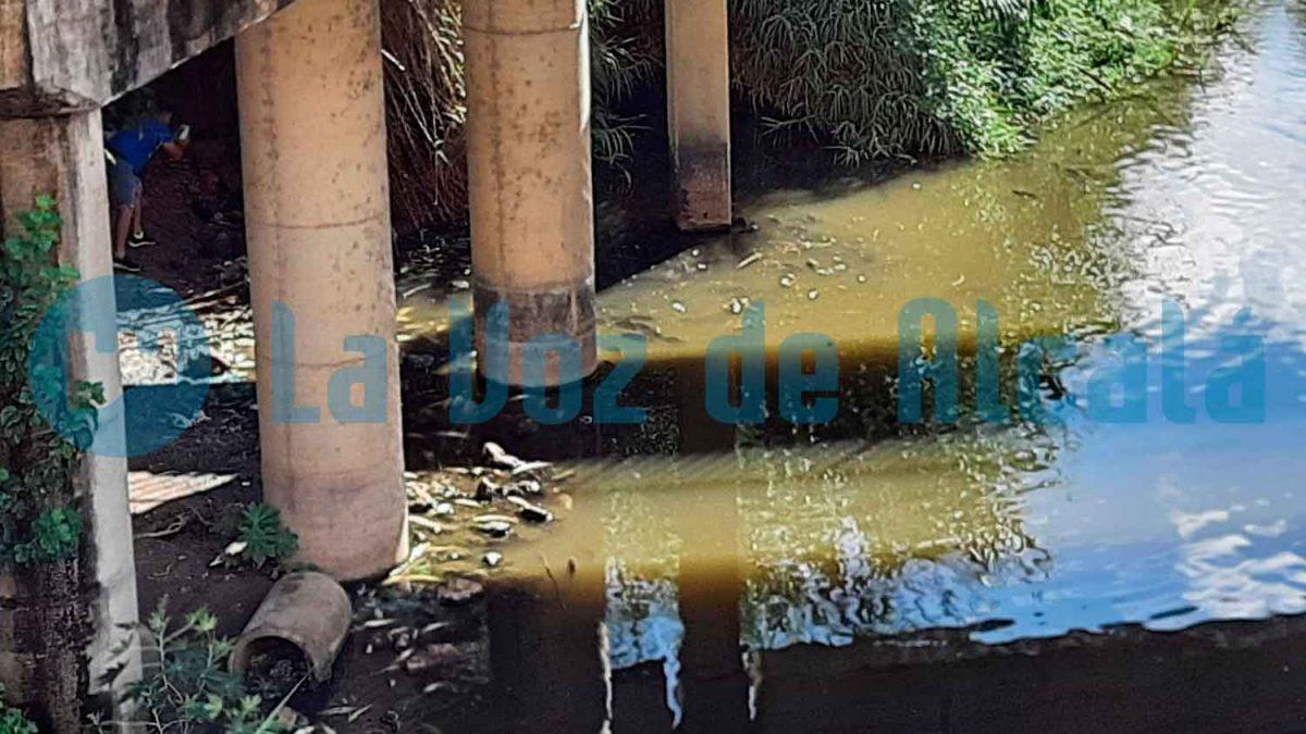 Peces muertos aparecidos el 15 de septiembre de 2021 junto al Puente Romano / LVA